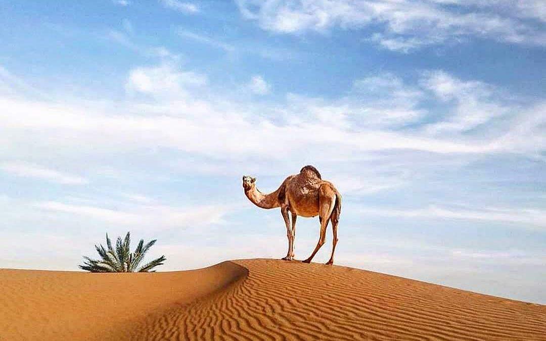 Da Marrakech al Deserto di Zagora