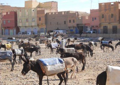 rissani-market-donkey