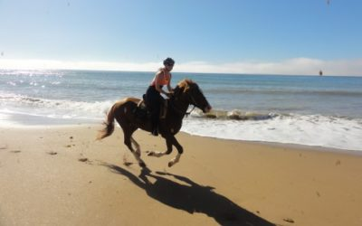 Horse ride on the beach